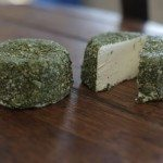 BoatShed Cheese - Oasis